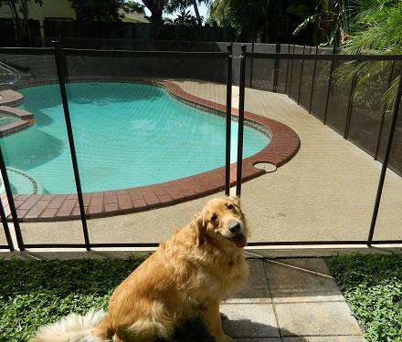 pet safety fence San Diego, CA